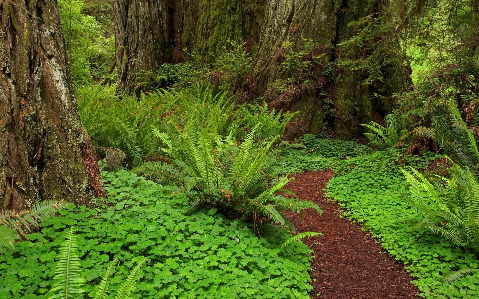 28885 скачать обои Растения, Пейзаж, Деревья, Папоротники - заставки и картинки бесплатно