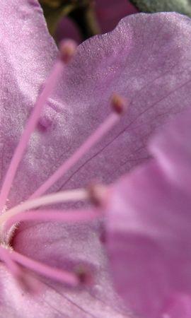2629 скачать обои Растения, Цветы - заставки и картинки бесплатно