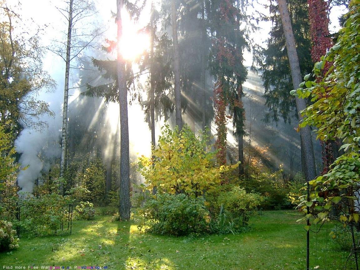10994 скачать обои Пейзаж, Деревья, Солнце - заставки и картинки бесплатно