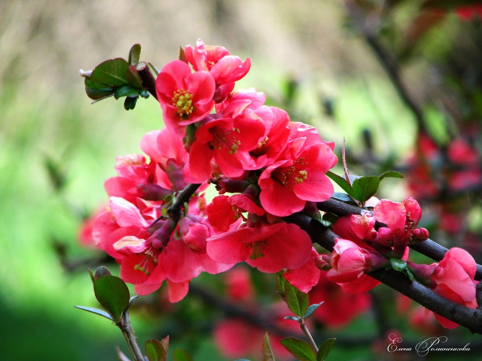 2953 скачать обои Растения, Цветы - заставки и картинки бесплатно