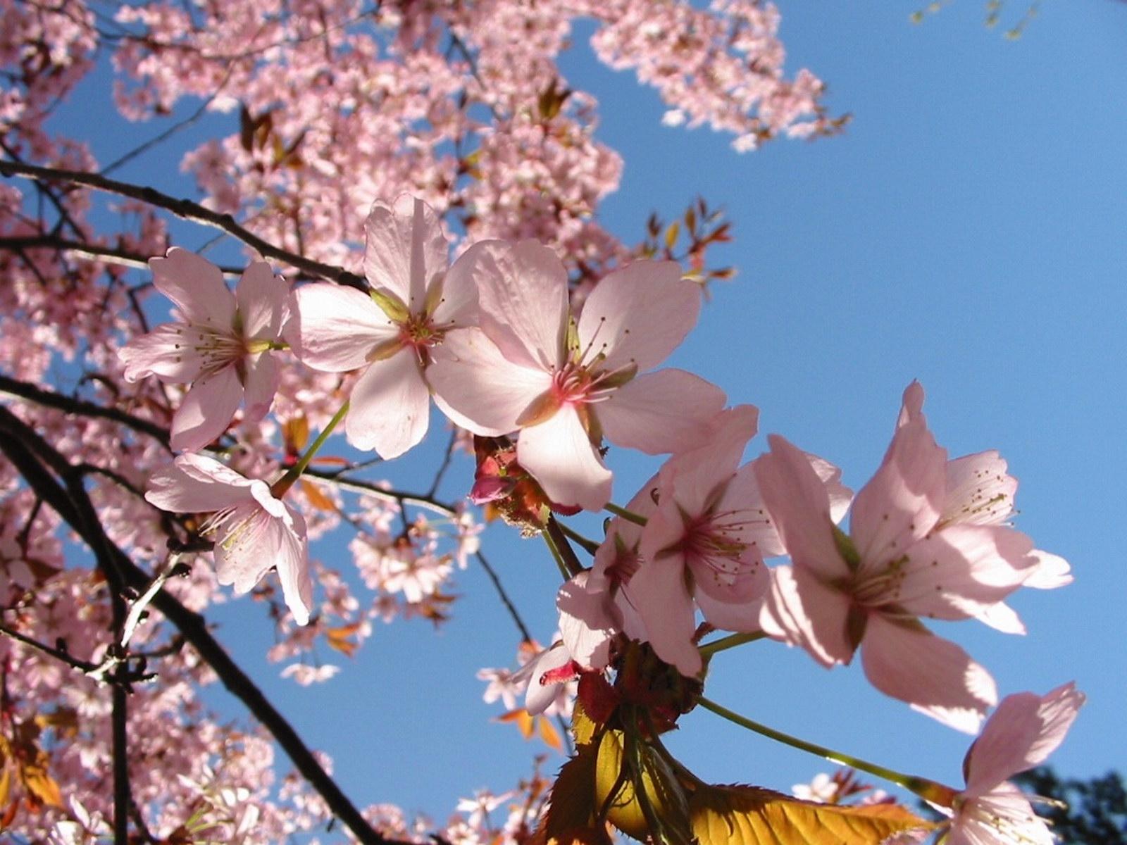 3411 скачать обои Растения, Цветы - заставки и картинки бесплатно