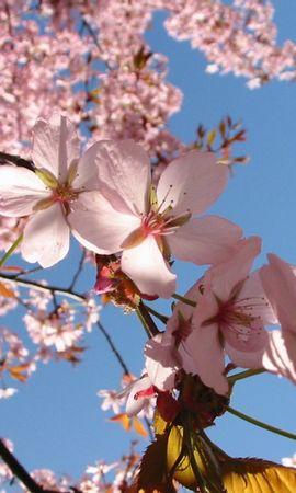 3411 descargar fondo de pantalla Plantas, Flores: protectores de pantalla e imágenes gratis