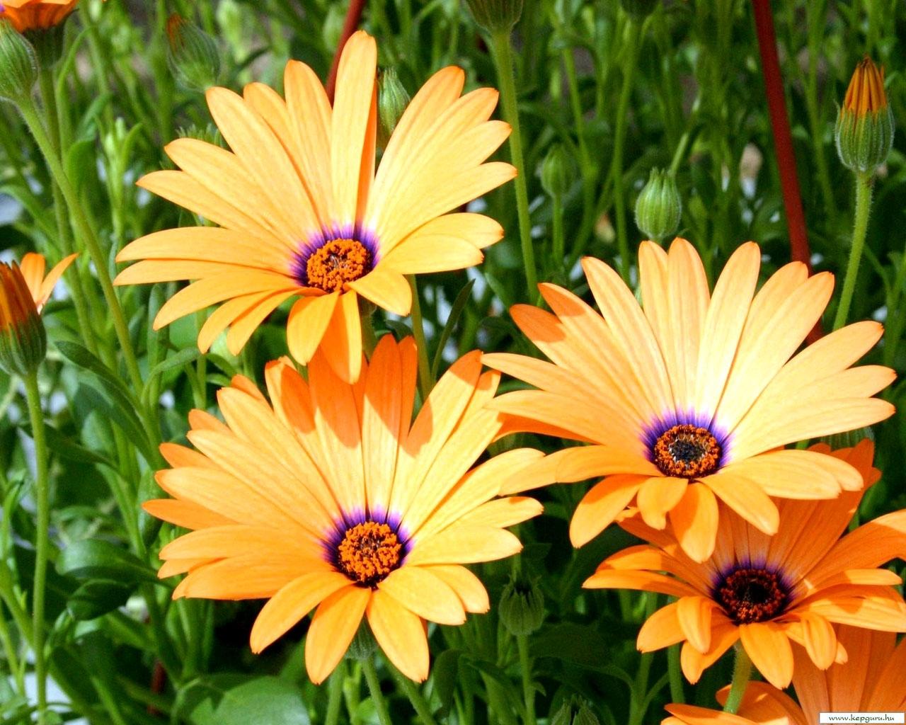 3332 скачать обои Растения, Цветы - заставки и картинки бесплатно