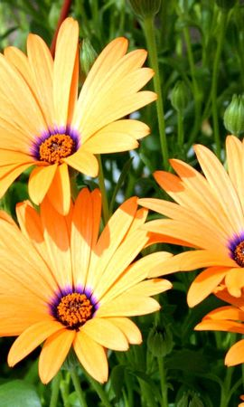 3332 descargar fondo de pantalla Plantas, Flores: protectores de pantalla e imágenes gratis