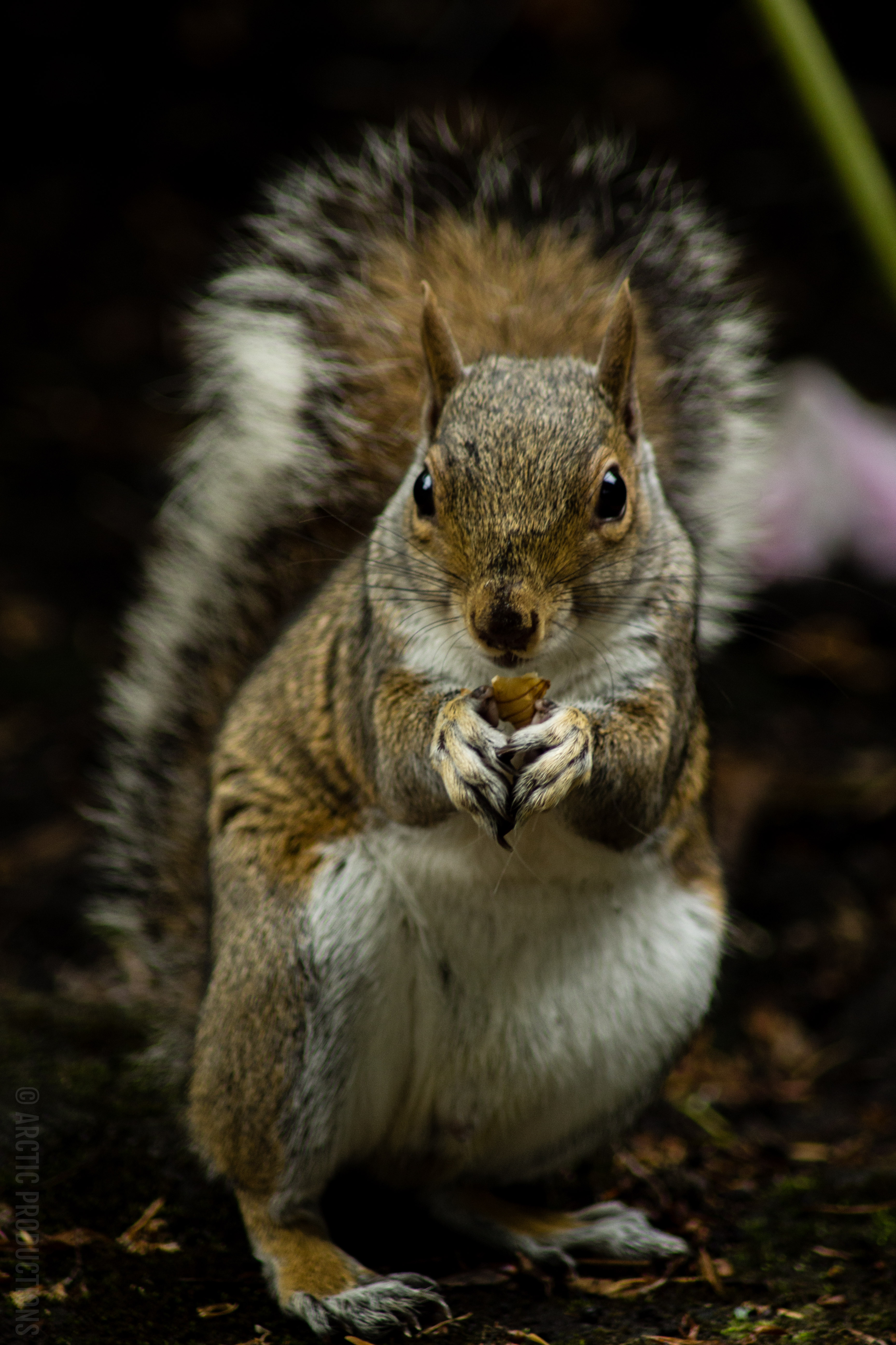105791 download wallpaper Animals, Squirrel, Rodent, Nice, Sweetheart, Animal screensavers and pictures for free