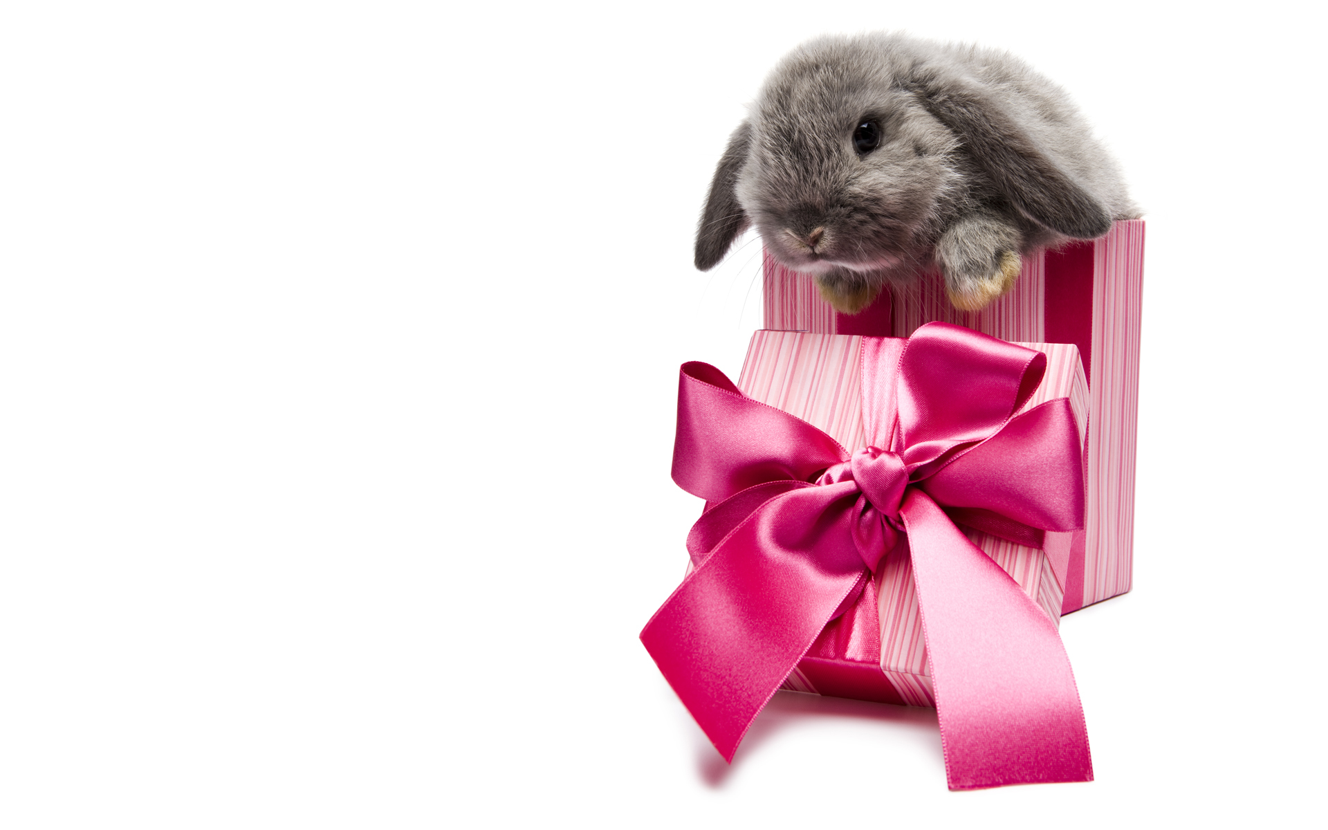 11314 Screensavers and Wallpapers Rabbits for phone. Download Animals, Holidays, Rodents, Rabbits pictures for free