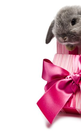 11314 download wallpaper Holidays, Animals, Rodents, Rabbits screensavers and pictures for free
