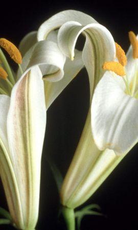 24845 скачать обои Растения, Цветы - заставки и картинки бесплатно