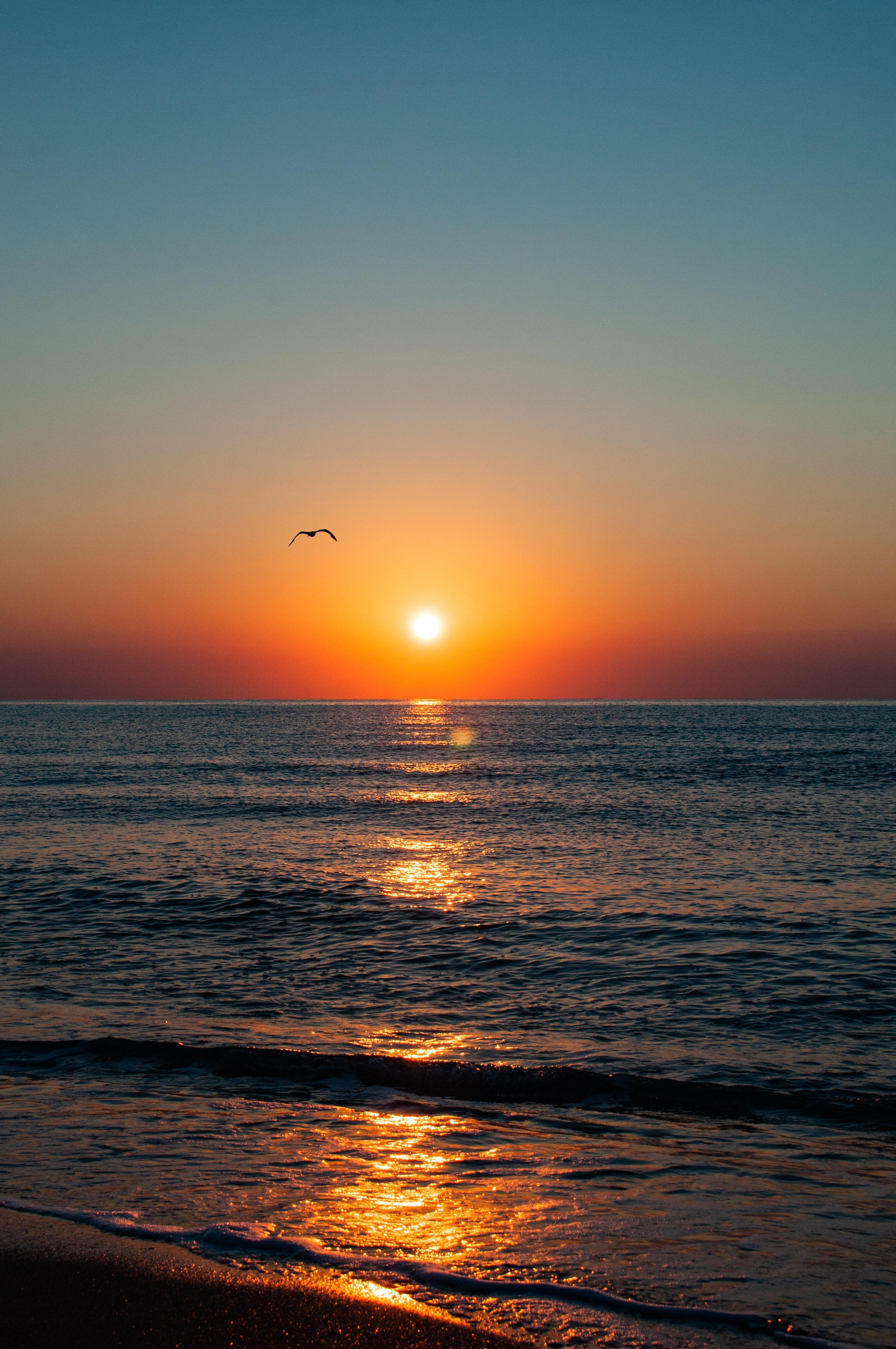 152339 скачать обои Природа, Закат, Чайка, Море, Побережье, Блики, Горизонт - заставки и картинки бесплатно