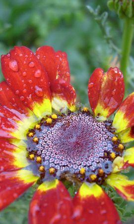 4138 скачать обои Растения, Цветы - заставки и картинки бесплатно