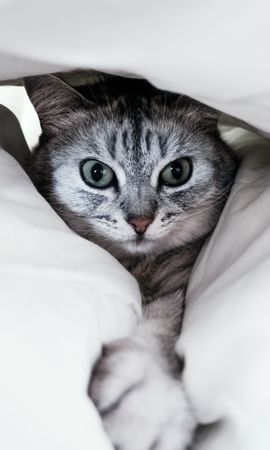 58646 download wallpaper Animals, Cat, Grey, Paw, Funny, Pet screensavers and pictures for free