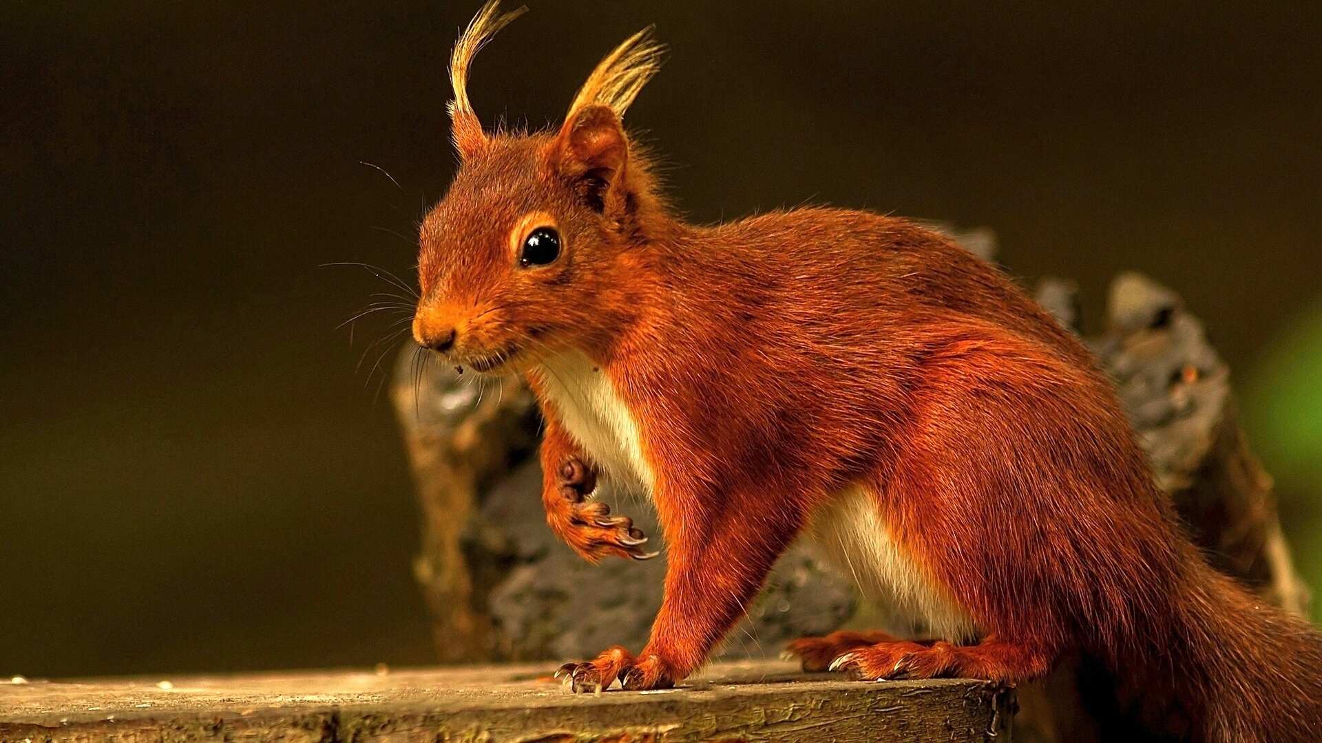 30743 download wallpaper Animals, Squirrel screensavers and pictures for free