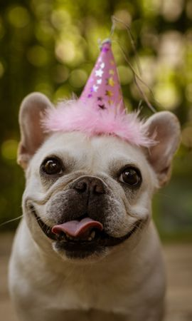 76440 download wallpaper Animals, Pug, Funny, Protruding Tongue, Tongue Stuck Out, Holiday screensavers and pictures for free