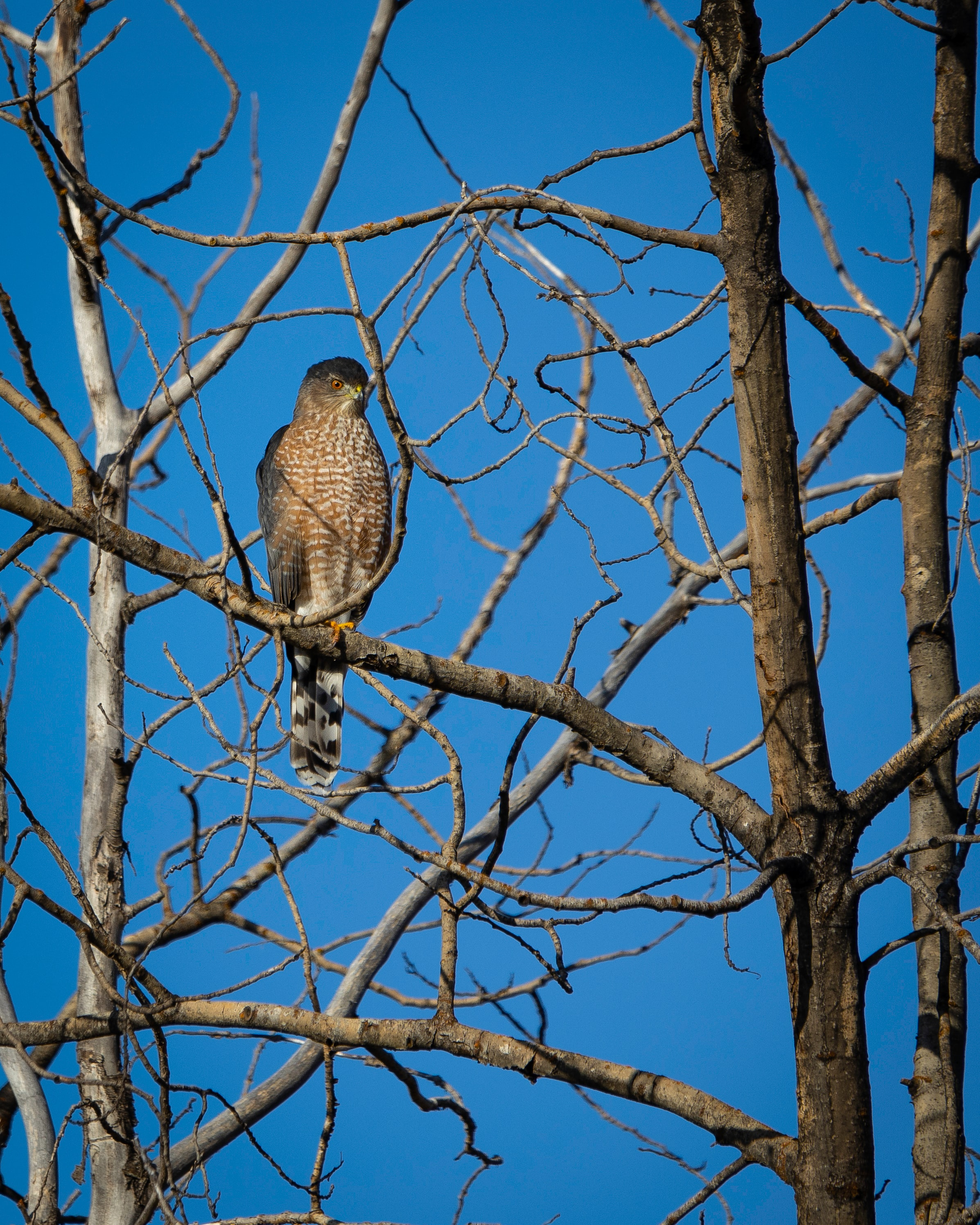 130514 download wallpaper Animals, Hawk, Bird, Predator, Wood, Tree screensavers and pictures for free