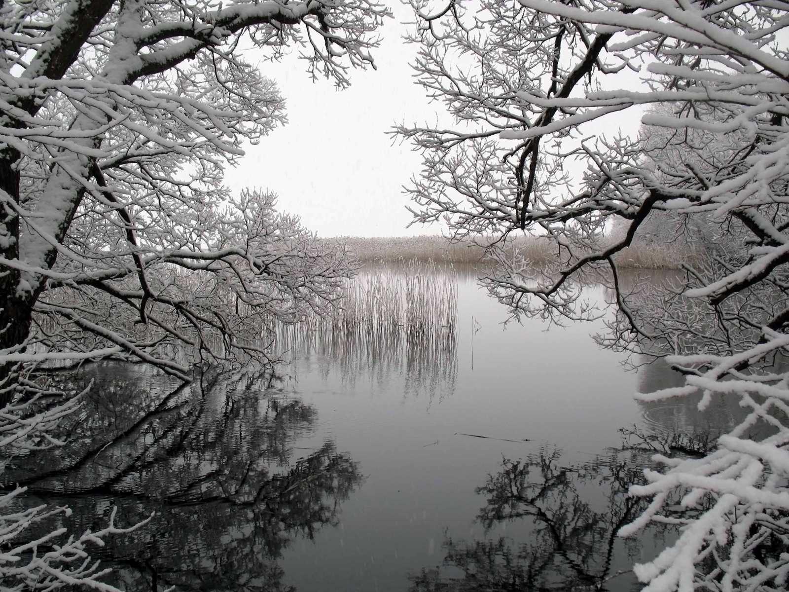 3913 скачать обои Пейзаж, Зима, Вода, Деревья, Озера - заставки и картинки бесплатно