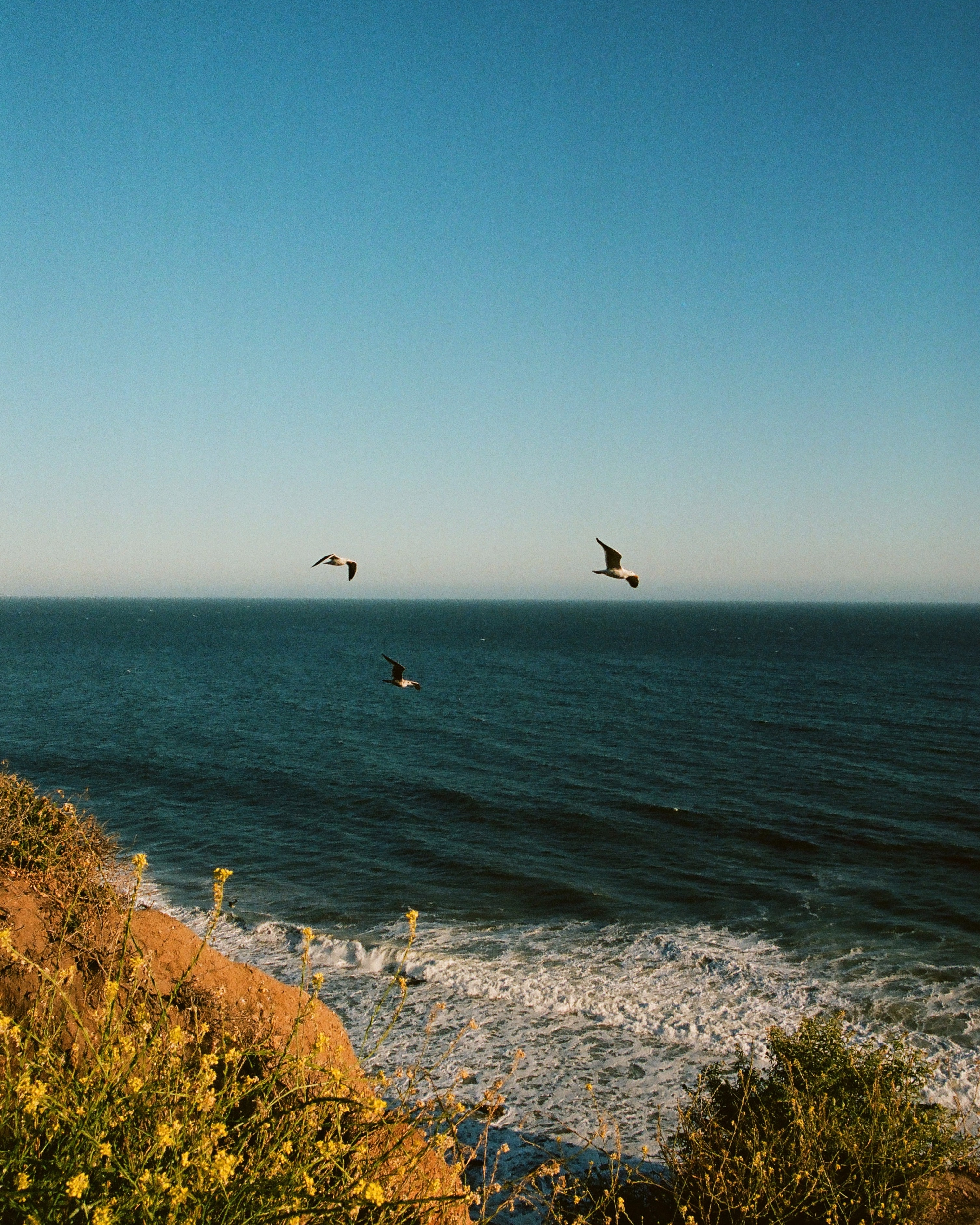 93204 download wallpaper Nature, Flowers, Birds, Sea, Seagulls, Waves screensavers and pictures for free