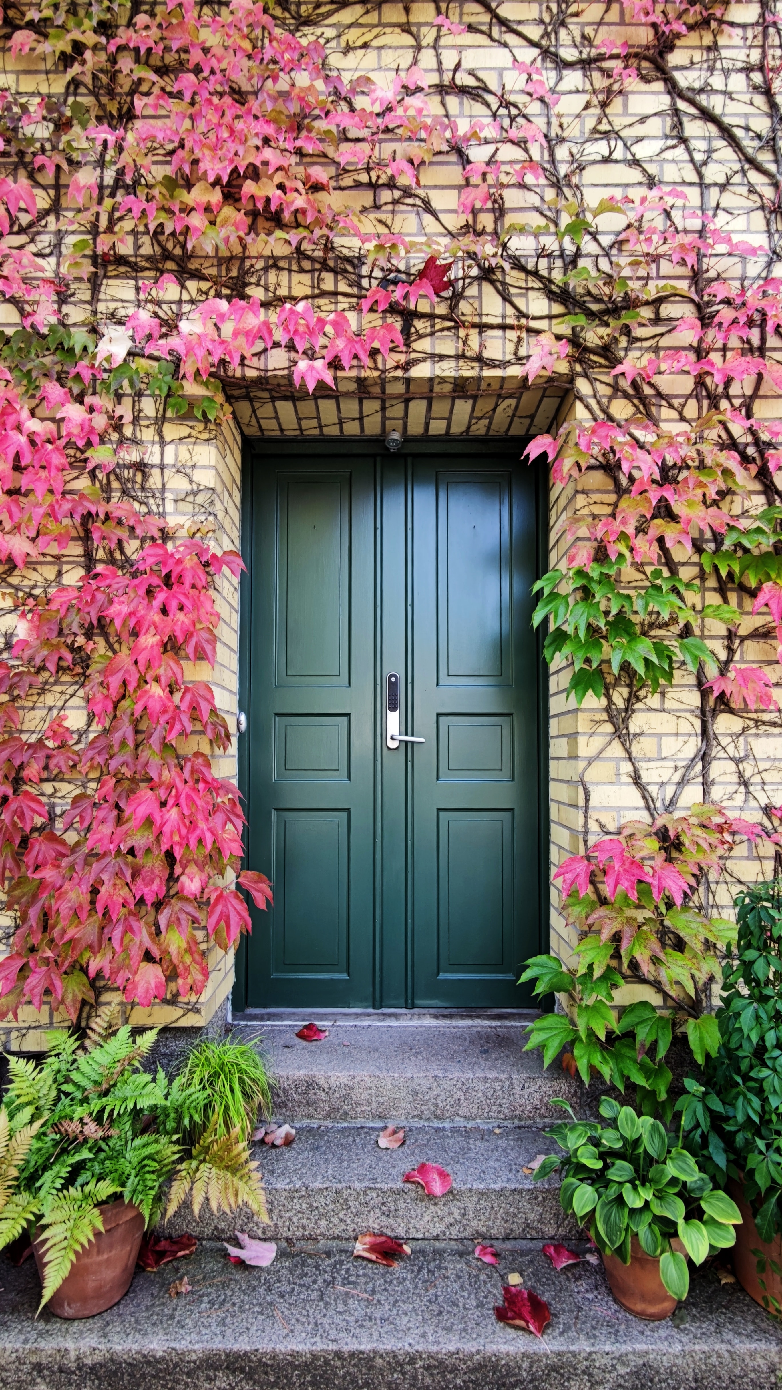 73746 download wallpaper Plants, Autumn, Miscellanea, Miscellaneous, Stairs, Ladder, Door screensavers and pictures for free