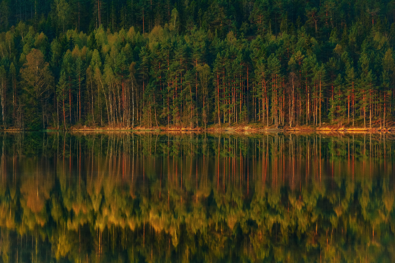 62464 скачать обои Природа, Озеро, Лес, Отражение, Деревья, Берег, Пейзаж - заставки и картинки бесплатно