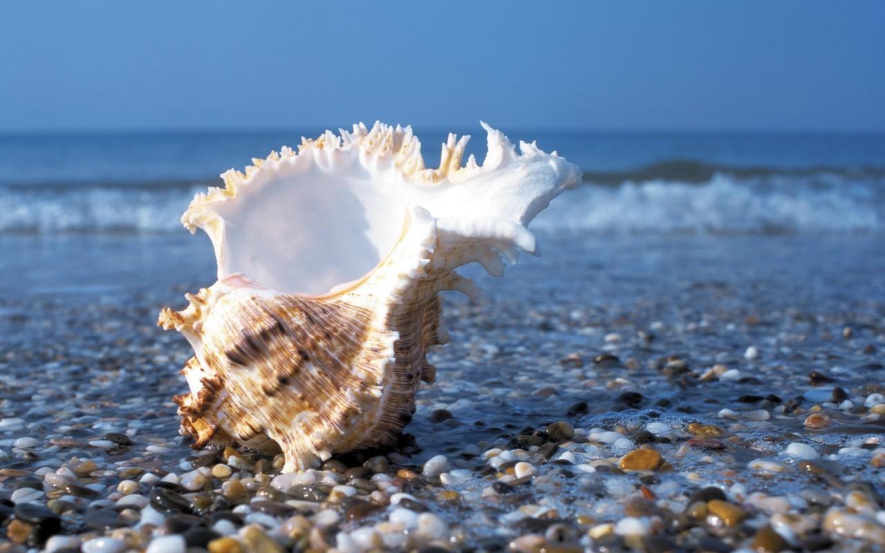 21250 скачать обои Пейзаж, Море, Пляж, Ракушки - заставки и картинки бесплатно