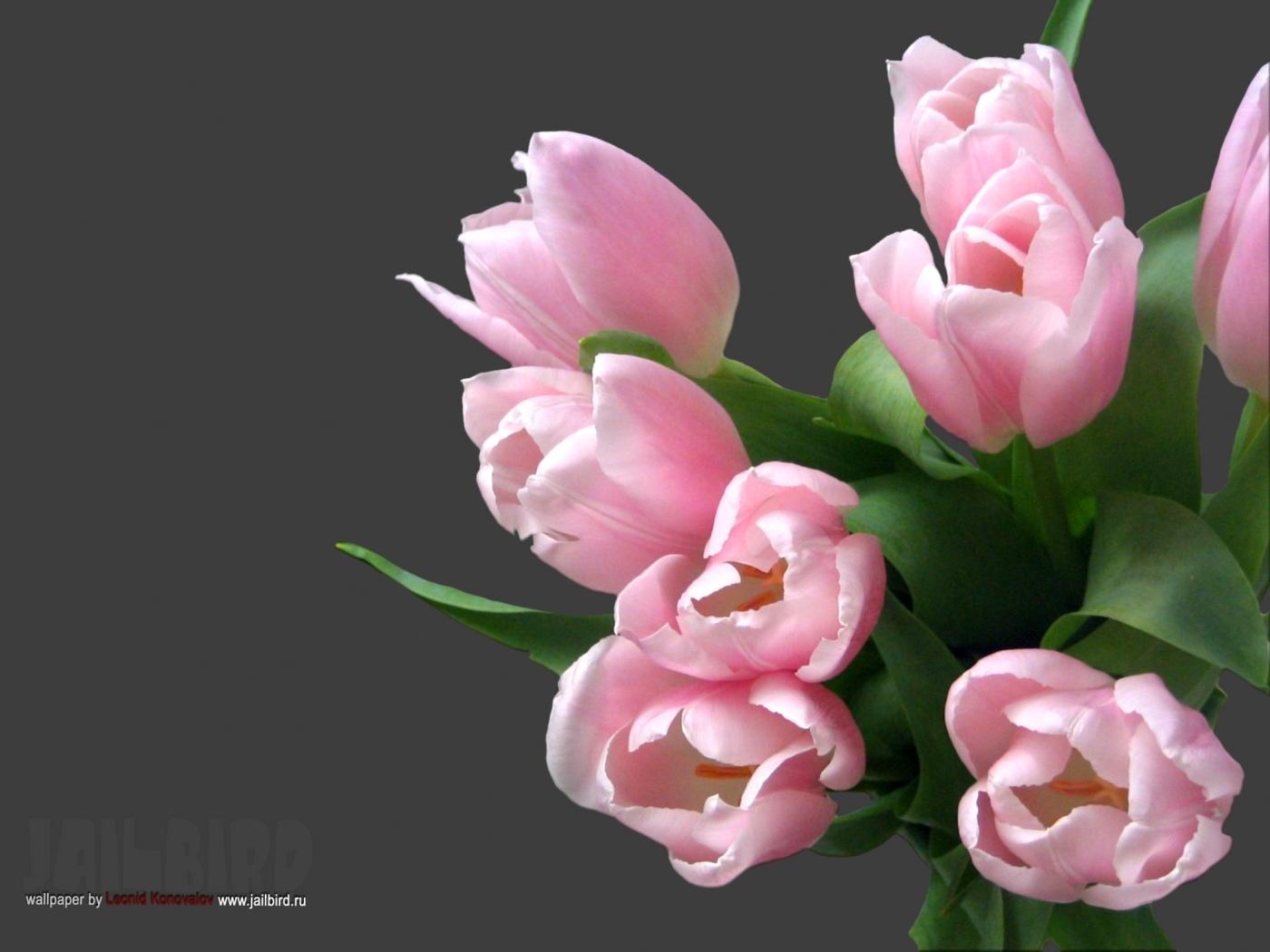 23347 télécharger le fond d'écran Plantes, Fleurs, Tulipes, Bouquets - économiseurs d'écran et images gratuitement