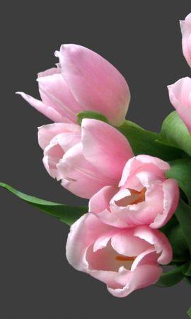 23347 скачать обои Растения, Цветы, Тюльпаны, Букеты - заставки и картинки бесплатно