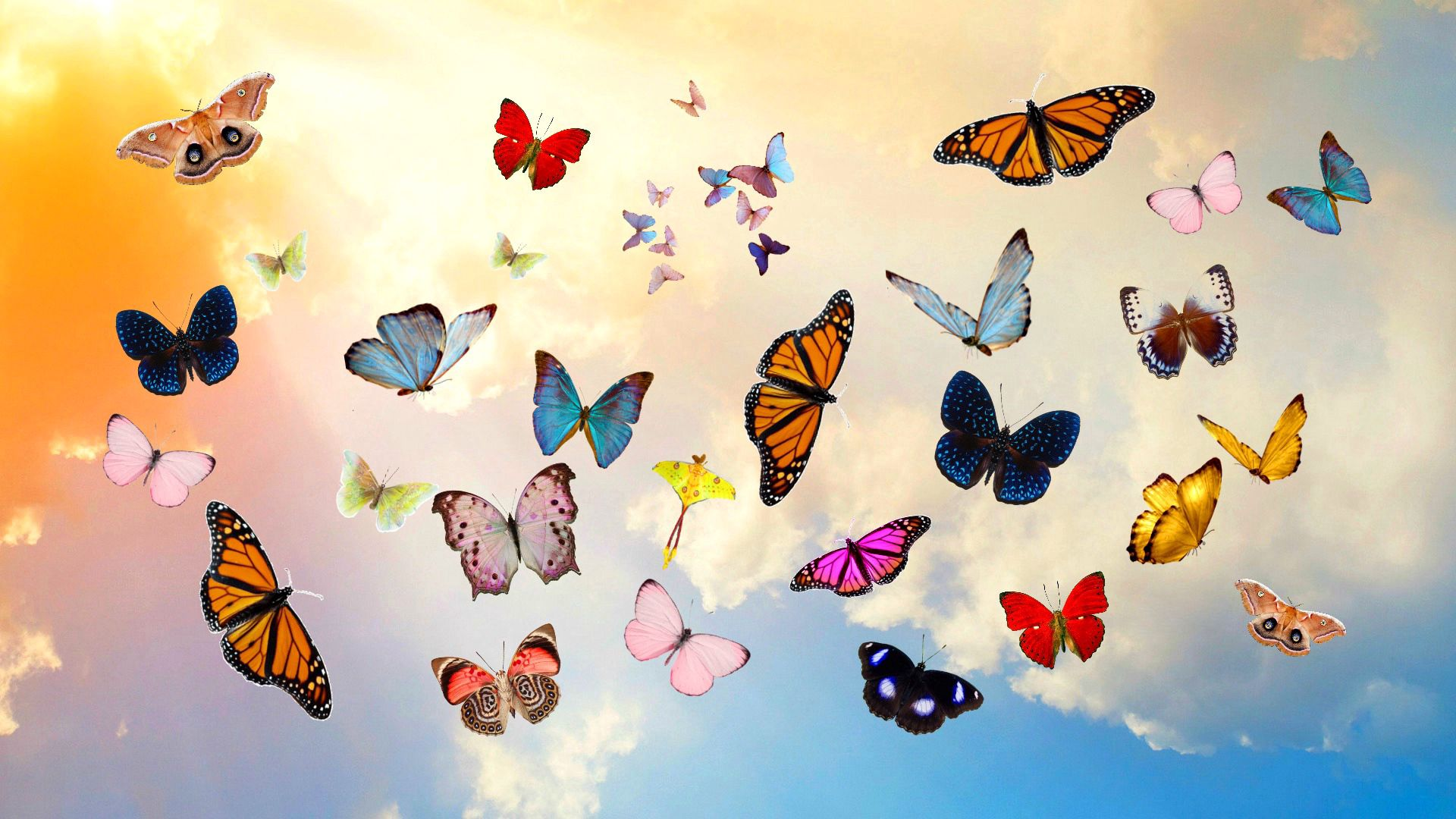 97275 download wallpaper Butterflies, Sky, Miscellanea, Miscellaneous, Collage, Photoshop screensavers and pictures for free