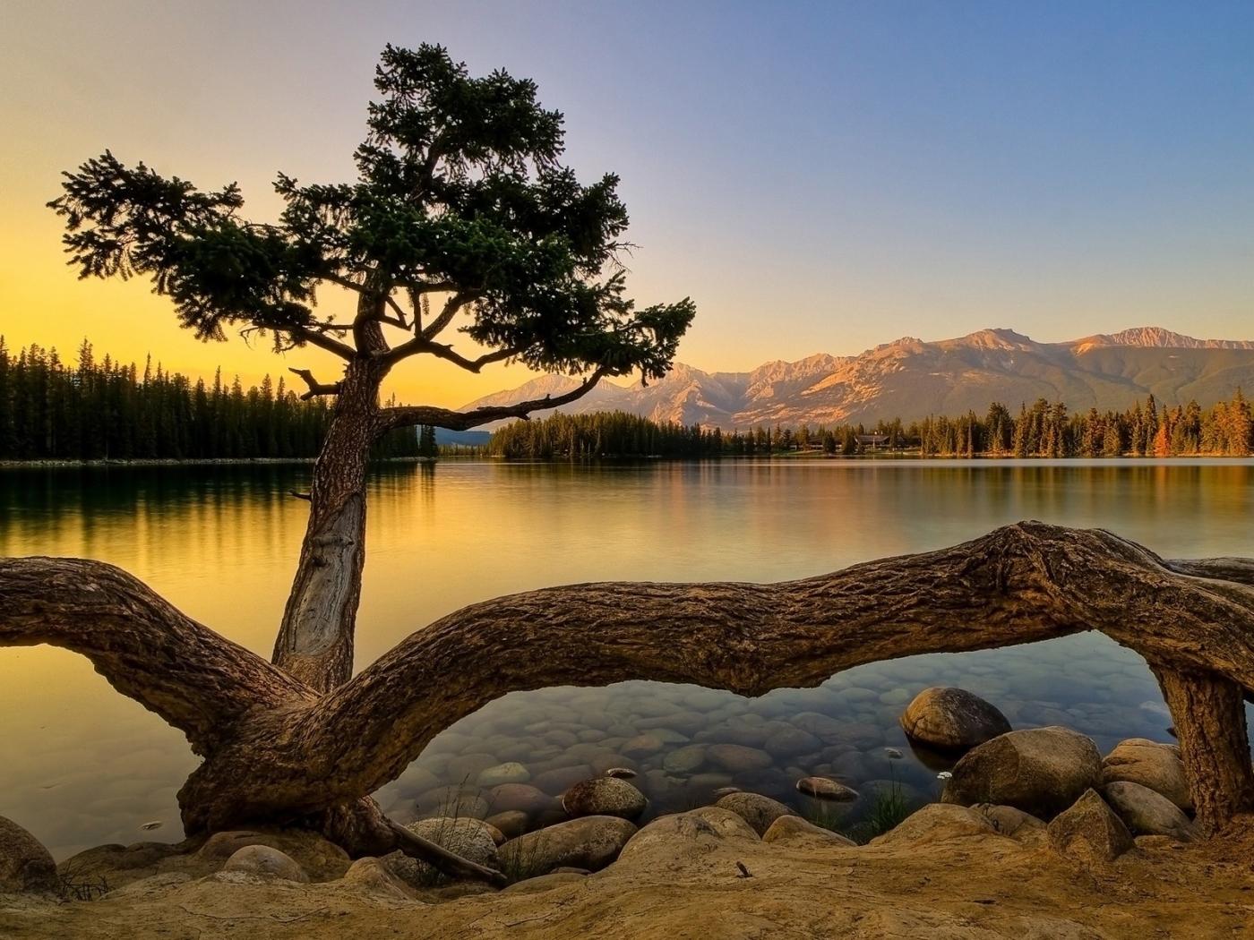 27733 скачать обои Пейзаж, Река, Деревья - заставки и картинки бесплатно