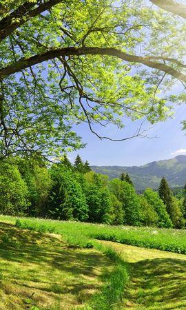 30250 скачать обои Пейзаж, Деревья - заставки и картинки бесплатно