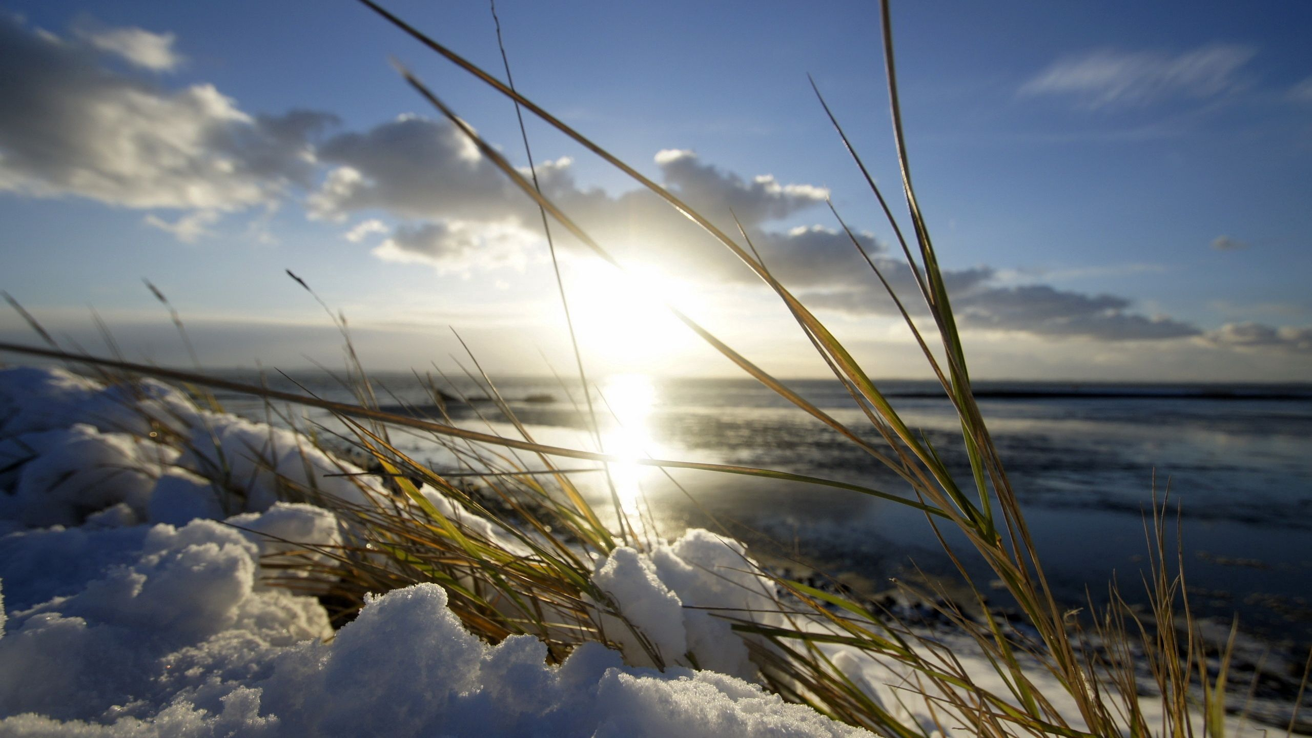 65784 download wallpaper Nature, Blade Of Grass, Blade, Shine, Light, Snow, Spring, Sun screensavers and pictures for free
