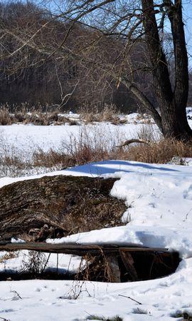 35294 скачать обои Пейзаж, Зима, Деревья - заставки и картинки бесплатно