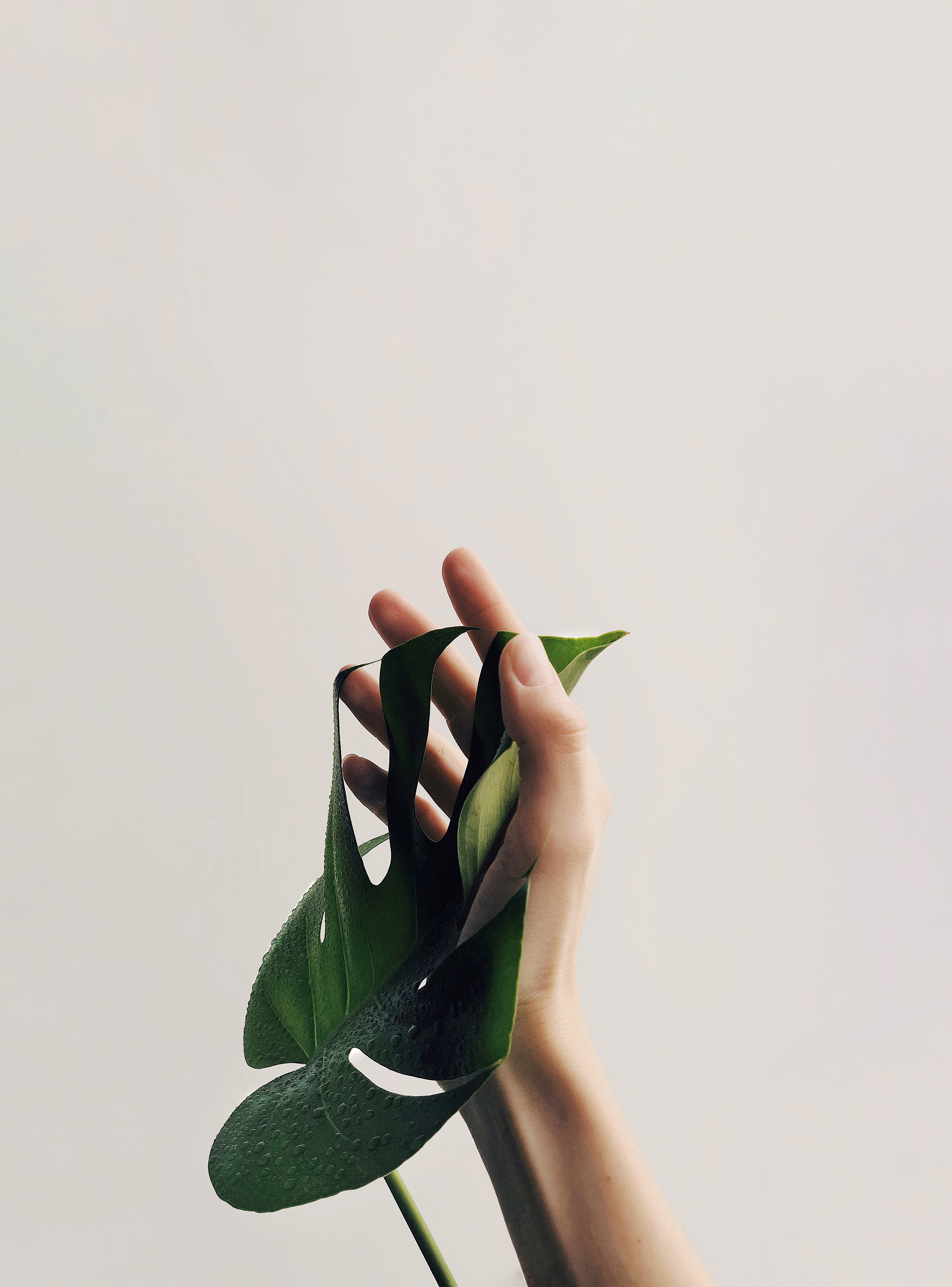 92961 Screensavers and Wallpapers Hand for phone. Download Minimalism, Hand, Sheet, Leaf, Plant, Drops pictures for free