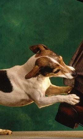45889 baixar papel de parede Animais, Cães - protetores de tela e imagens gratuitamente