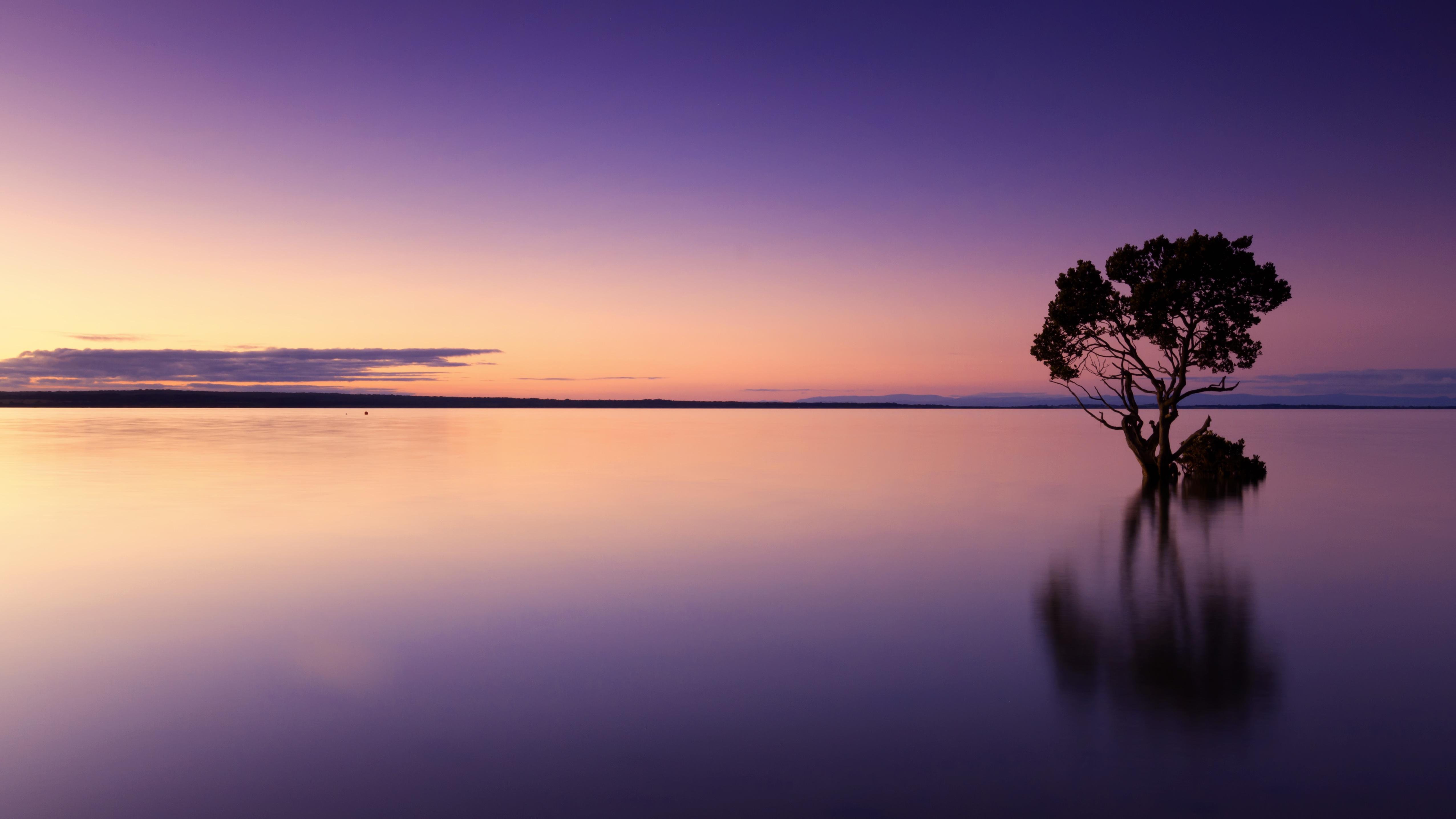 148955 завантажити шпалери Природа, Небо, Вода, Захід, Озеро, Дерево, Вечір, Пурпурний - заставки і картинки безкоштовно