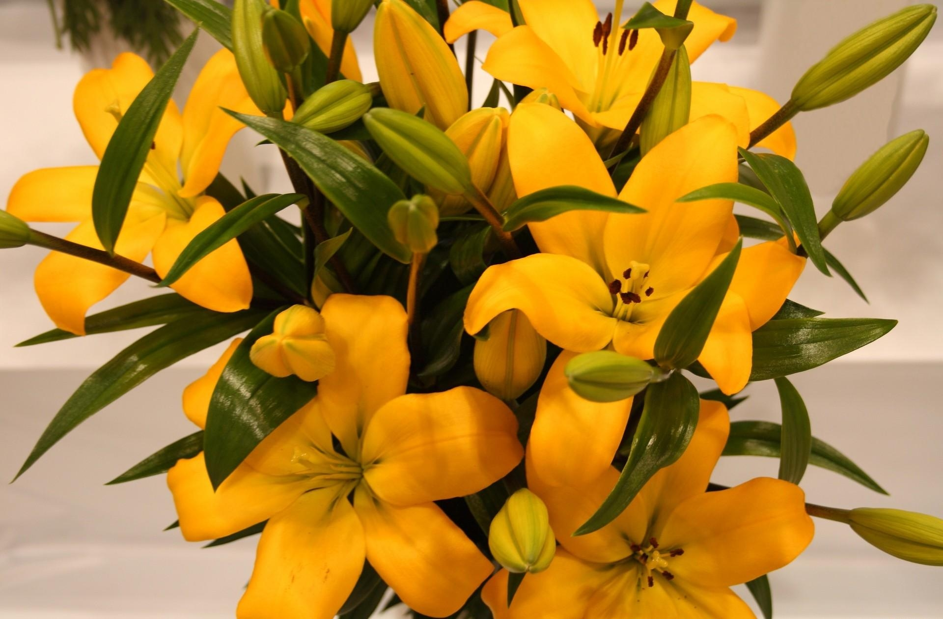 Download mobile wallpaper Flowers, Leaves, Lilies, Buds for free.