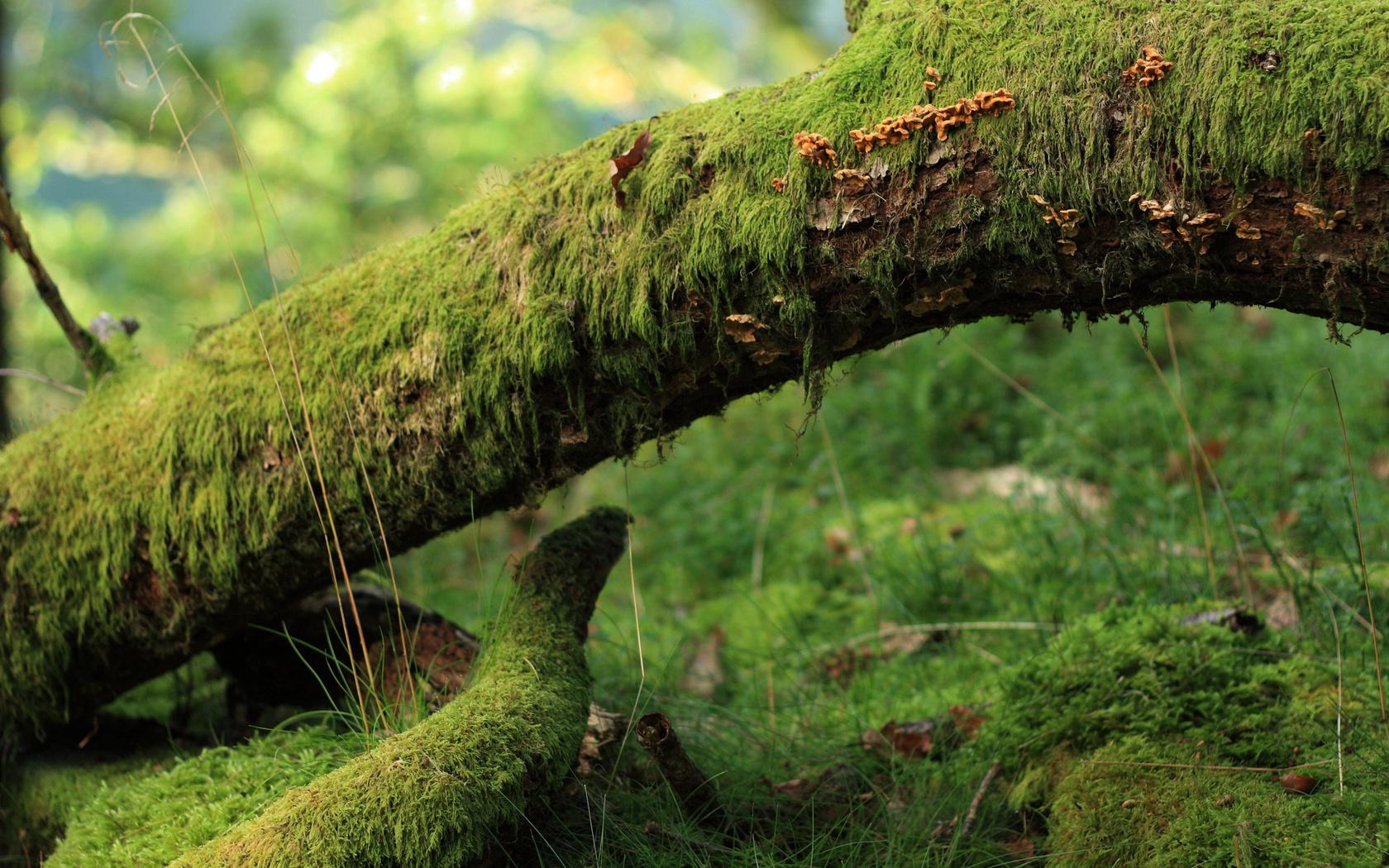 20285 скачать обои Пейзаж, Деревья, Трава - заставки и картинки бесплатно