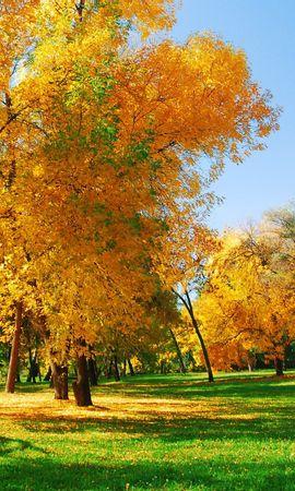 30055 скачать обои Пейзаж, Деревья, Осень - заставки и картинки бесплатно