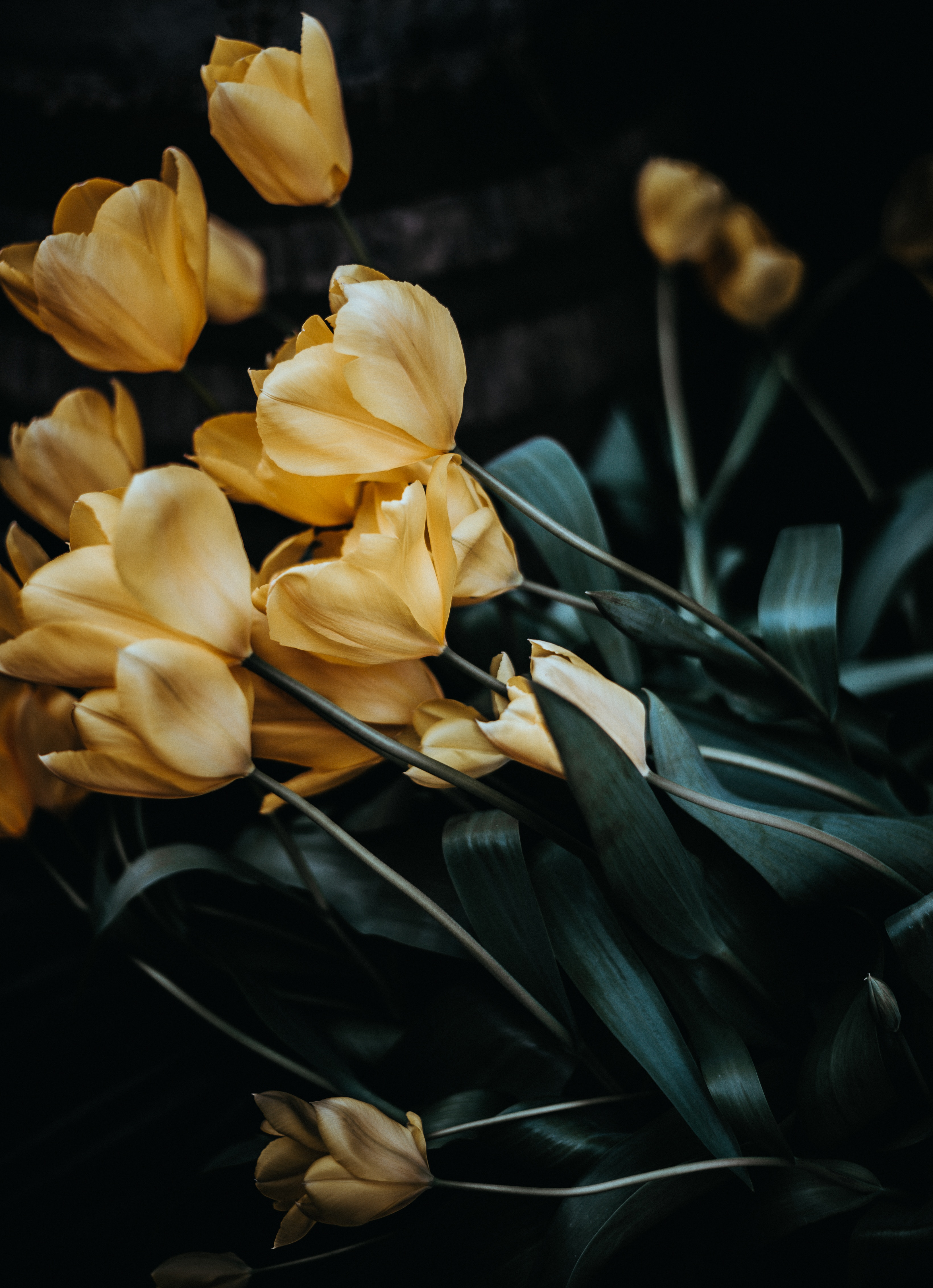 117769 descargar fondo de pantalla Flores, Ramo, Tulipanes: protectores de pantalla e imágenes gratis