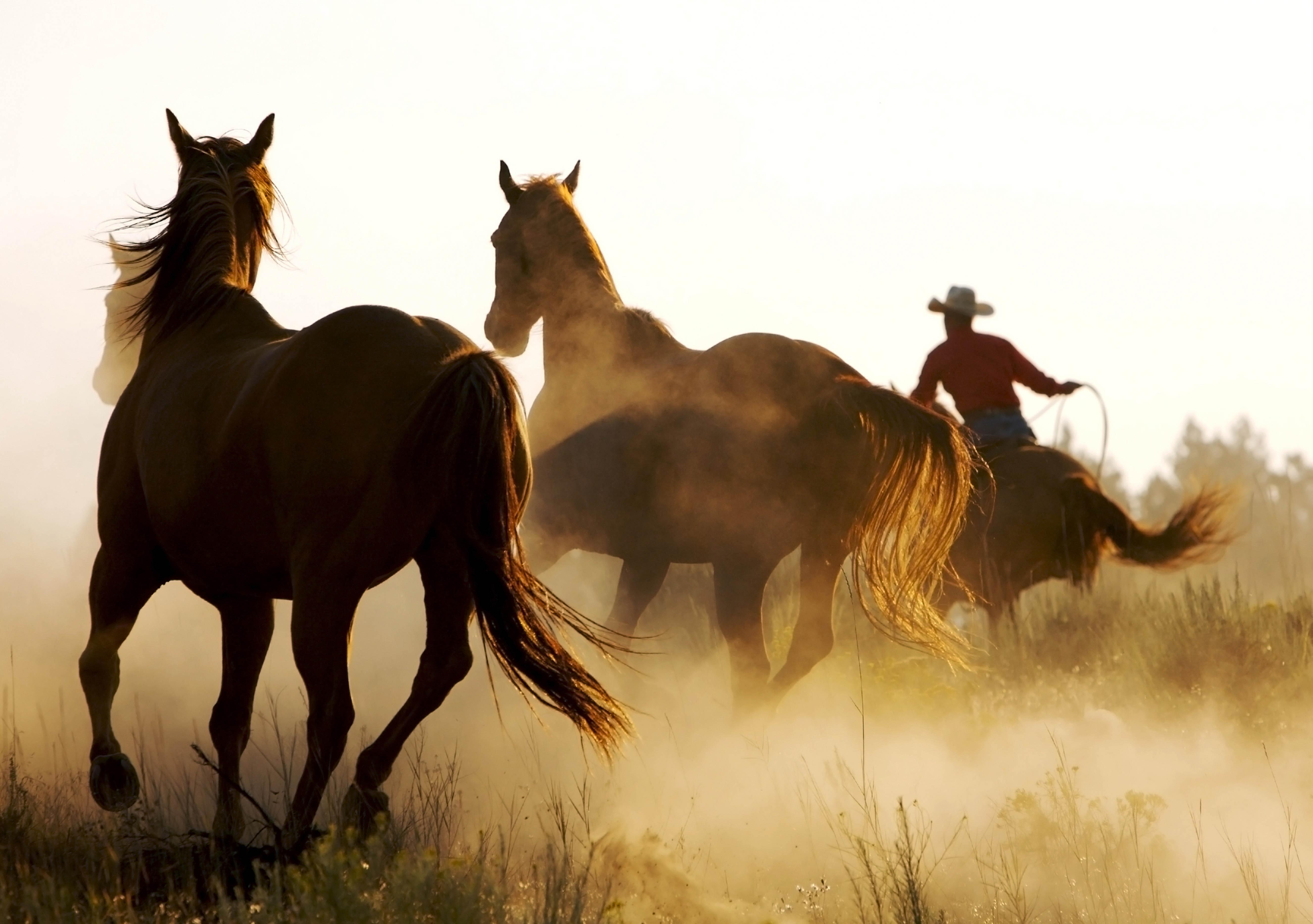105173 Protetores de tela e papéis de parede Cavalos em seu telefone. Baixe Cavalos, Animais, Laço, Vaqueiro, Laçar fotos gratuitamente