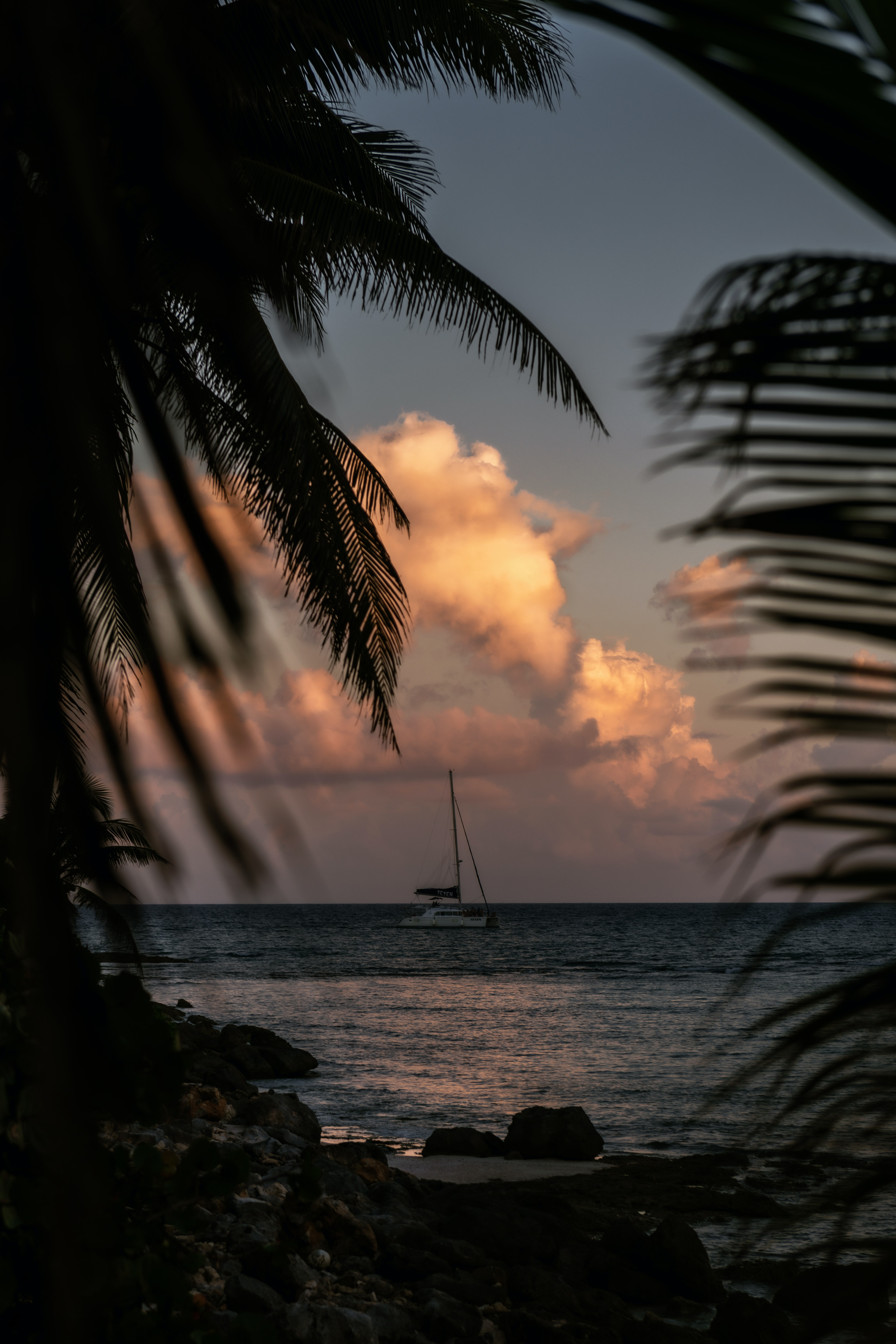112235 download wallpaper Dark, Boat, Sea, Branches, Dusk, Twilight, Palms screensavers and pictures for free