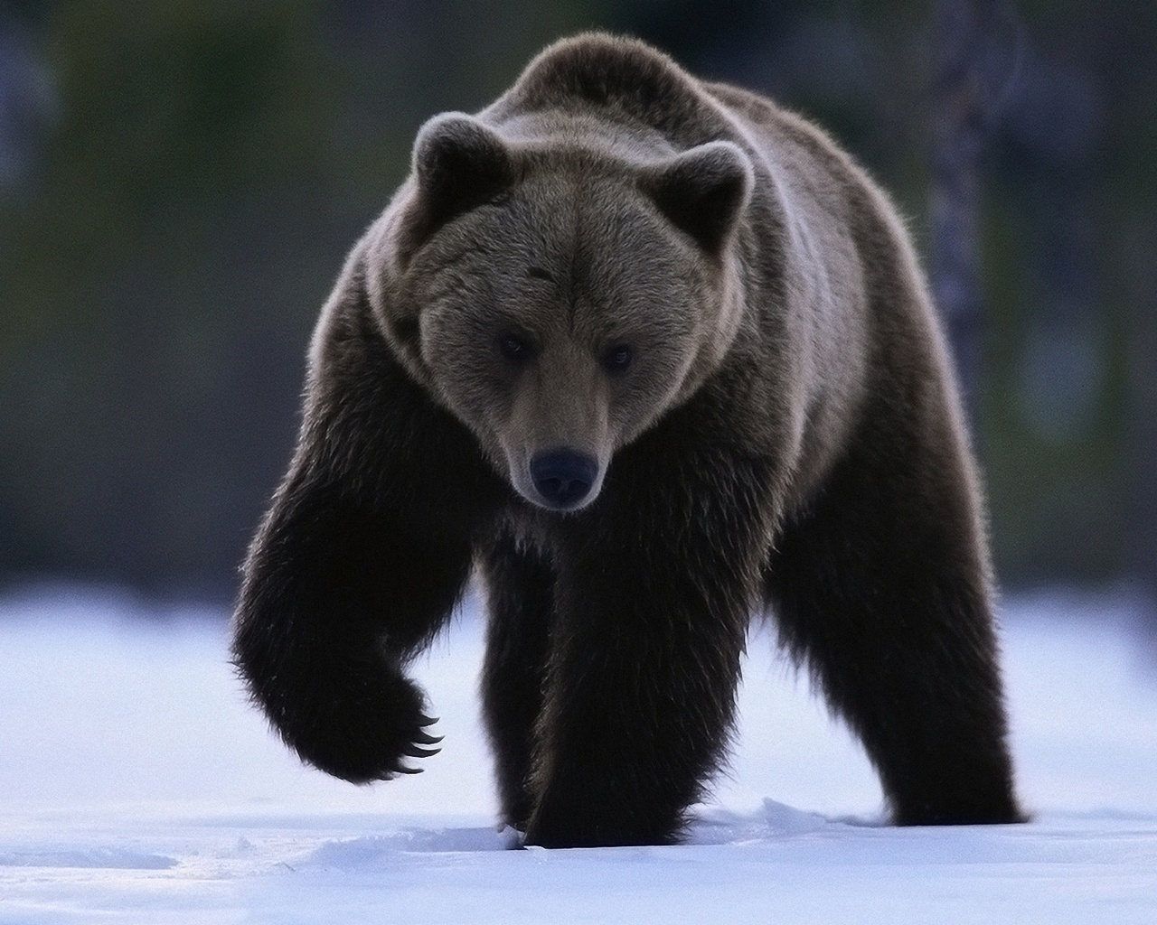 18156 Заставки и Обои Медведи на телефон. Скачать Медведи, Животные картинки бесплатно