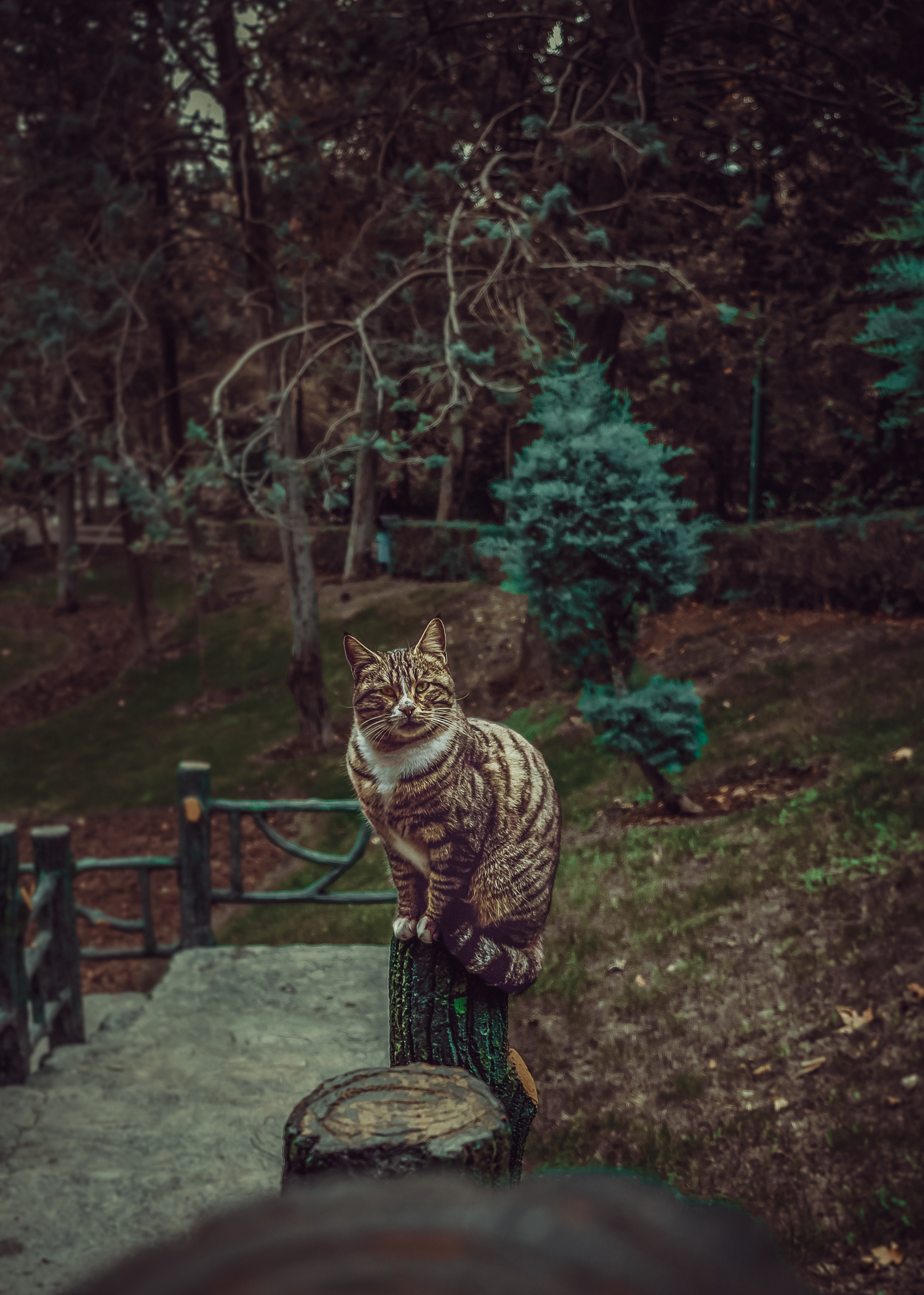 147432 Screensavers and Wallpapers Pet for phone. Download Animals, Cat, Striped, Pet, Sight, Opinion pictures for free