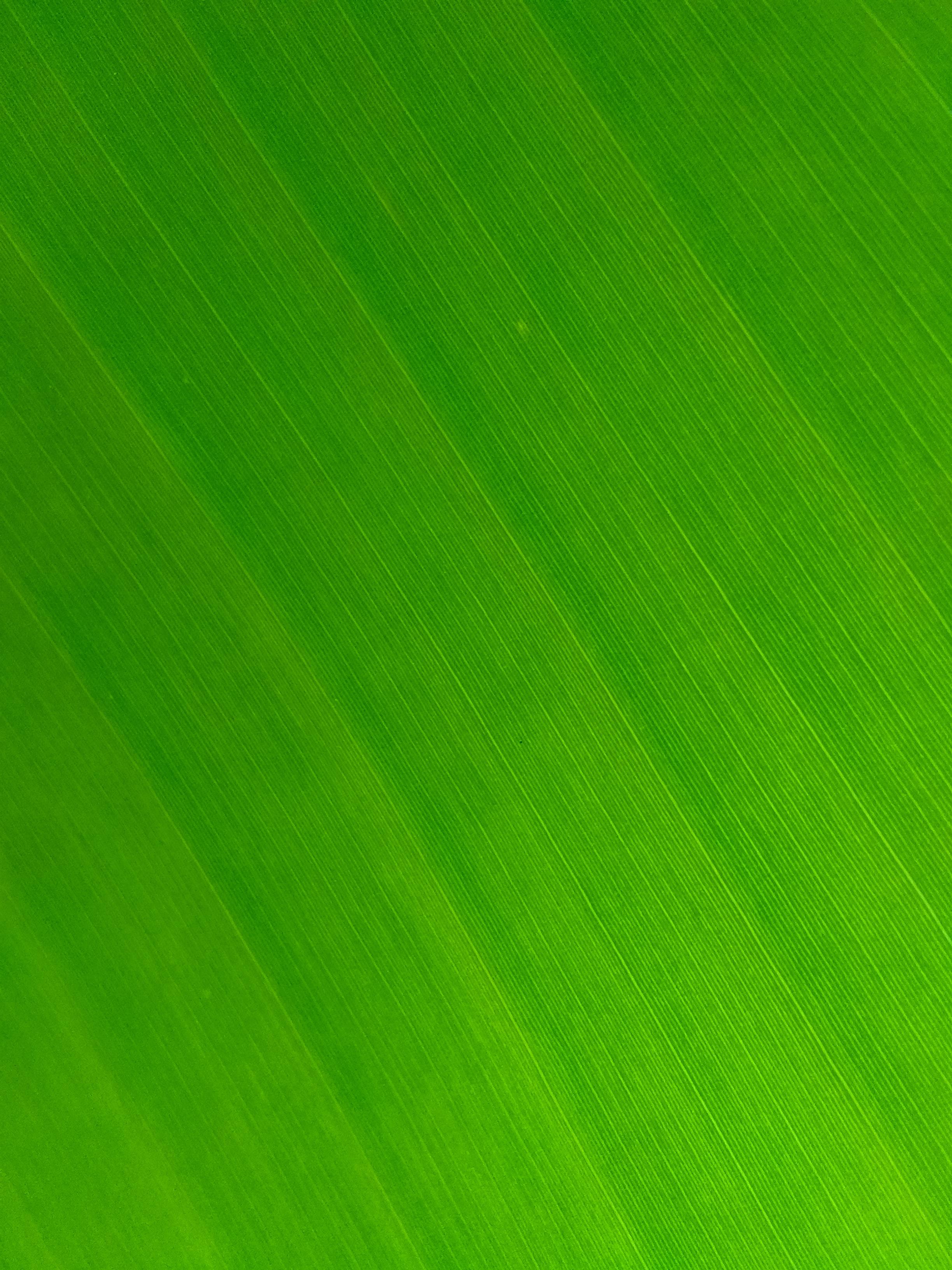 141241 Lade kostenlos Grün Hintergrundbilder für dein Handy herunter, Texturen, Makro, Textur, Blatt, Streifen, Venen Grün Bilder und Bildschirmschoner für dein Handy