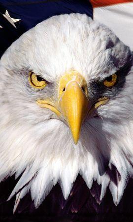 9797 baixar papel de parede Animais, Aves, Eagles - protetores de tela e imagens gratuitamente