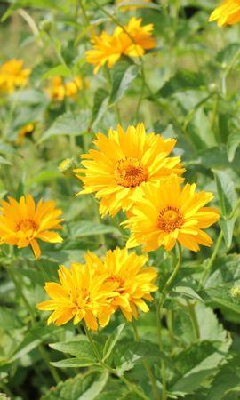 46678 baixar papel de parede Plantas, Flores - protetores de tela e imagens gratuitamente