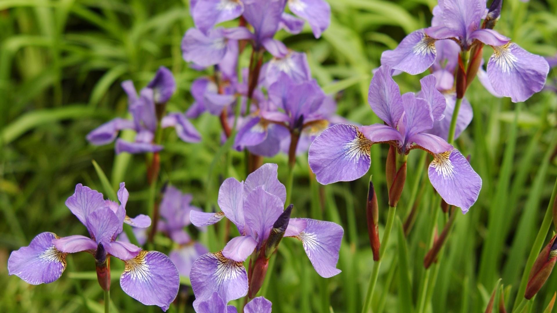 6569 скачать обои Растения, Цветы - заставки и картинки бесплатно