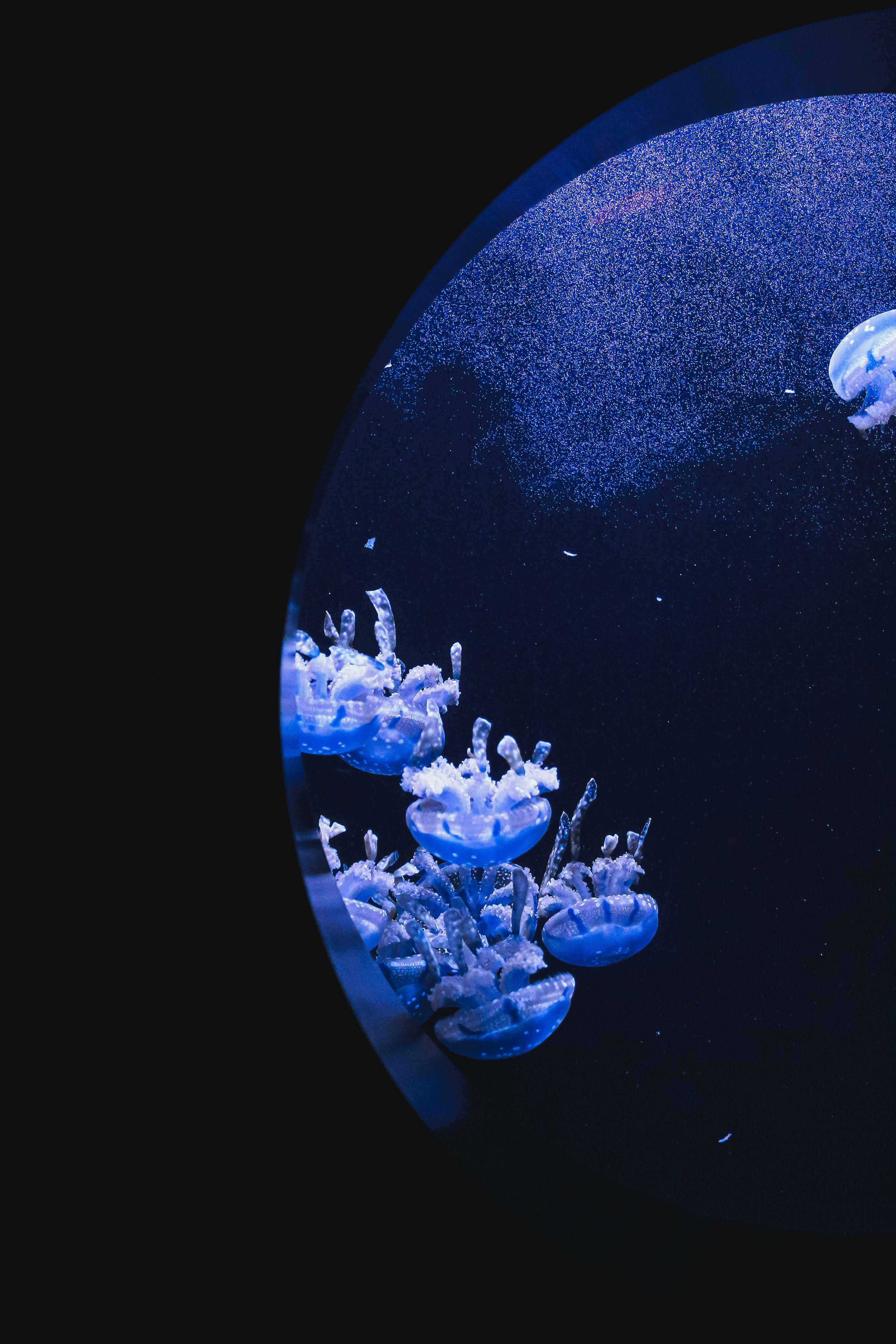 157343 скачать обои Животные, Под Водой, Вода, Иллюминатор, Макро, Медузы - заставки и картинки бесплатно