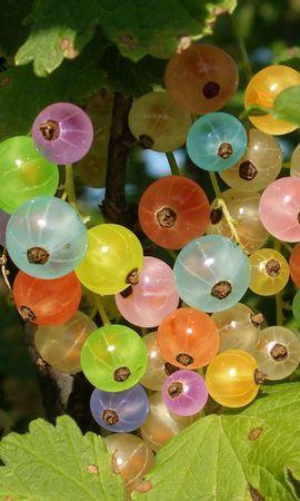 112510 télécharger le fond d'écran Nourriture, Groseille, Baie, Baies, Multicolore, Coloré, Feuilles - économiseurs d'écran et images gratuitement