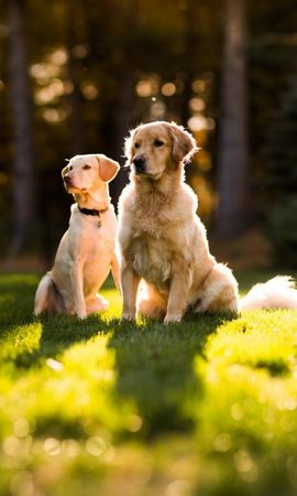 16442 download wallpaper Animals, Dogs screensavers and pictures for free