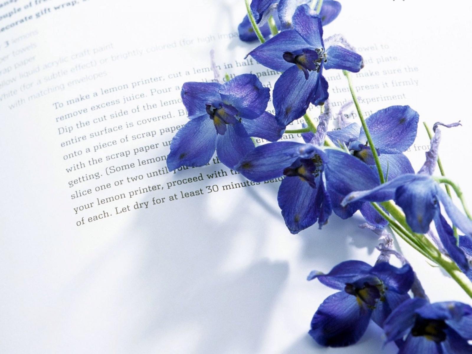 22149 descargar fondo de pantalla Plantas, Flores, Objetos, Libros: protectores de pantalla e imágenes gratis