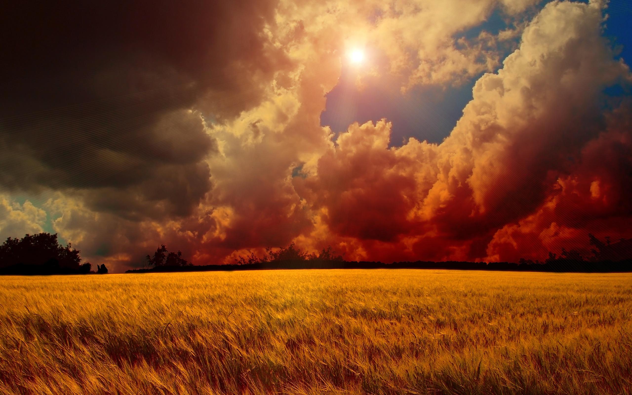 25902 скачать обои Пейзаж, Поля, Небо, Солнце, Облака - заставки и картинки бесплатно